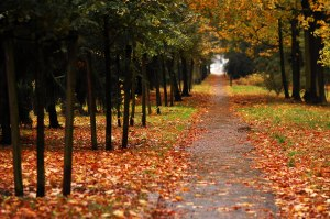 A_rainy_autumn_day_2_by_tilk_the_cyborg