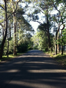 Late afternoon walk in Wahroonga